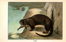 """1926 Vintage Animals """"Otter"""" With Fish Wild Gorgeous Color Art Print Lithograph"""
