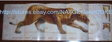 National Geographic POSTER CATS in CRISIS December 2011 Lion Leopard Jaguar Puma