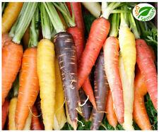 Zanahoria Mezcla de Colores ( 2.000 semillas ) seeds ** variada **