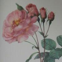"Large Vintage Pierre-Joseph Redouté Botanical Study of Rose Art Plate,  16""x12"""