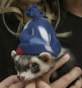 Marshall Pet Ferret Polar Invierno Ropa Sombrero Sombreros Cálido Lindo