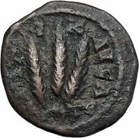 SEVERUS ALEXANDER 226AD Caesarea Cappadocia Grain Ears Ancient Roman Coin i46837