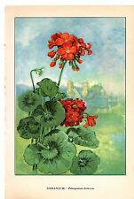 1926 Vintage GARDEN FLOWER