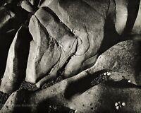 1960s ANSEL ADAMS Vintage Rock Shellfish Nature Abstract Photo Gravure Art 11X14