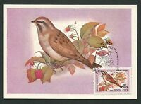 RUSSIA MK FAUNA VÖGEL BIRDS OISEAUX MAXIMUMKARTE CARTE MAXIMUM CARD MC CM d261