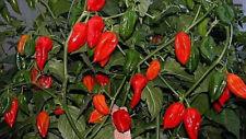 Peperoncino FATALII RED - 10 Semi Selezionati