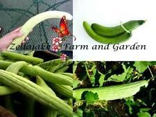 Armenian Cucumber Pale & Dark Mix Seeds bin5