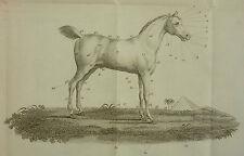 CLATER - VETERINAIRE DOMESTIQUE GUERIR SOI MEME SES CHEVAUX - 1822 PHYTOTHERAPIE