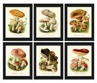 Unframed Mushrooms Botanical Print Set of 6 Vintage Antique Nature Home Wall Art