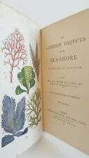 The Common Objects of the Sea-Shore JG Wood 1894 13th edn Sowerby colour plates