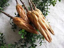 5x Protea Repens hell Exoten Herbst Palmspeere Allerheiligen Totensonntag