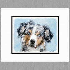 Miniature American Australian Shepherd Original Art Print 8x10 Matted to 11x14