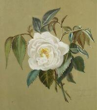 Gemälde, undeutlich signiert / 1881 / weiße Rose / alte Gouachemalerei im Rahmen