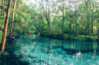 1/4 AC Land by pond,close to Santa Rosa Beach,PENSACOLA&PANAMA,FL/Pre-Foreclosur