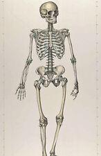 Large Medical Anatomy Chart Skeletal Skeleton Illustration Canvas Art Print