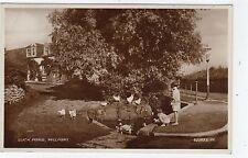 DUCK POND, MILLPORT: Isle of Cumbrae postcard (C7074).