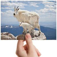 "Baby Mountain Goat Animal - Small Photograph 6"" x 4"" Art Print Photo Gift #12621"