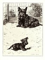 1946 Antique SCOTTISH TERRIER Dog Print Morgan Dennis Dog Art Scottie Art 3353