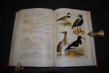 Wink - Deutschlands Vögel - 1889