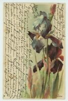 C. Klein, Flowers, Iris, Early Embossed Chromo Art Postcard, B929