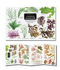 Field Guide A Key to Common Seaweeds Laminated Identification Chart Poster