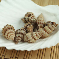 3-4 cm Seashells Shells Snails Mini Spiral Conch Beach Wedding Home Decor (x20)