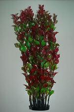 PIANTA ACQUARIO rosso a cespuglio Ludwigia 36cms ALTO adatto per tutti gli