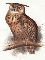 PAINTING BIRDS GOULD LEAR EAGLE OWL ART PRINT POSTER LAH539A