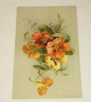 Catherine Klein Flower Art Print c 1920 Series 319 Switzerland C. Klein