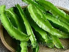 "15 Seeds "" Winged Bean "" Goa bean, four-angled Corner- Manila Bean - Dragon Bean"