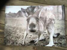 Australian kangaroo mens gift  Man cave flag banner poster mancave gift idea