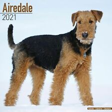 Airedale Calendar 2021 Premium Dog Breed Calendars