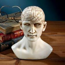 Phrenology Head Statue Pseudoscience Brain Map Victorian Replica Sculpture