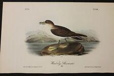 AUDUBON'S BIRDS of AMERICA -WANDERING SHEARWATER- First Edition Octavo Plate 456