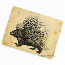 Porcupine Deco Magnet, Decorative Fridge Vintage Animal Illustration Quills Gift