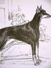 Gladys E. Cook Doberman Pinscher 1962 Dog Print Matted