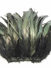 50+ BLACK IRIDESCENT ROOSTER COQUE TAIL FEATHER 6
