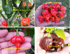 World's Official 4 Hottest Chilli Pepper Collection - 10 Seeds from Each Variety