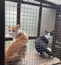 Donate dinner & treats for Houdini's feral friend, Dash - Ceredigion Cat Rescue