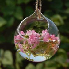 Ball Shape Hanging Glass Vase Flower Plants Micro Landscape Bottle Fish Tank us