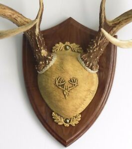 Walnut Ultimate Antler Mounting Kit for Deer - The Taxidermists' Woodshop