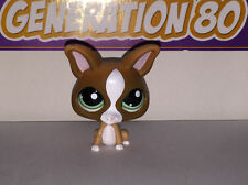 Littlest PetShop CHIHUAHUA MARRON 1568 D049 CHIEN DOG Pet Shop