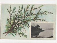 Loch Fad Rothesay Bute 1910 Postcard 548a