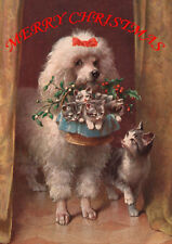 POODLE WITH CAT AND KITTENS SINGLE DOG PRINT GREETING CHRISTMAS CARD