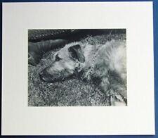 "Original 1931 EDWARD STEICHEN Listed Artist "" Boots and Dog ""   Photogravure"