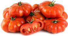 Organic Super Healthy Antioxidant-Rich Giant Italian Trumpet Bell Tomato 25 Seed