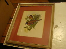 Vintage  Framed Print bird: not sure what the birds are.