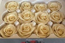 12 Stabilisierte, auf Glycerinbasis konservierte Rosenköpfe; Ewig haltbare Rosen