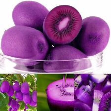 100PCS/Bag Imported Purple Kiwi Seeds Milk Taste Delicious Fruit Seeds