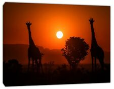 GRAFFES AND SUNSETS  PICTURE PRINT ON FRAMED CANVAS  WALL ART HOME DECORATION